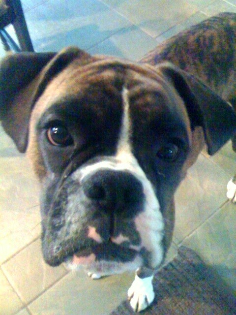Fernando the Wonder Dog