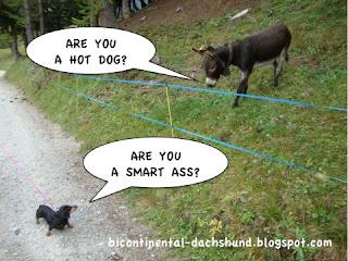 hot_dog_smart_ass